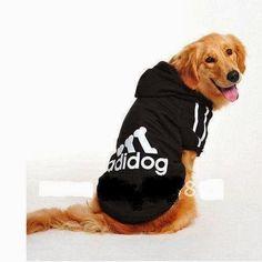 51 melhores imagens de roupa pet no Pinterest   Dog clothing, Dog ... 1919f15480