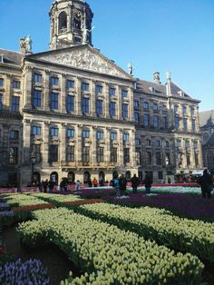 Tulips on Dam Square in Amsterdam with the Royal Palace on the back ground. 21-1-2017