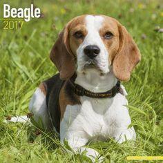 Avonside Hunde-Kalender 2017Avonside Hunde Wandkalender 2017: Beagle