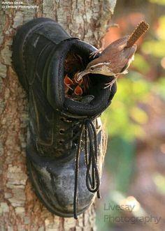 Een goed pensioen voor deze schoen.