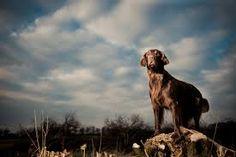tierfotos tipps - Google-Suche Tier Fotos, Labrador Retriever, Google, Dogs, Animals, Inspiration, Searching, Animales, Labrador Retrievers