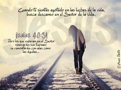 YO SOY EL BUEN PASTOR: Isaías 40:31