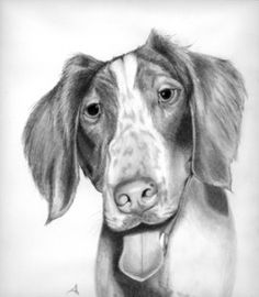 Meet Speckles, my Brittany Spaniel and subject of my new book, Raising My Furry Children.