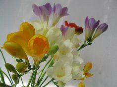Stelian Ilie Nature Nature Photos, Exercise, Plants, Ejercicio, Excercise, Tone It Up, Flora, Work Outs, Plant