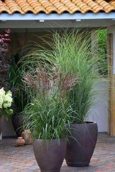 37 Flower Landscape Design Ideas to have a Colorful Garden -.- 37 Flower Landscape Design Ideas to have a Colorful Garden – 37 Flower Landscape Design Ideas to have a Colorful Garden – - Garden Troughs, Garden Planters, Garden Beds, Garden Grass, Garden Shade, Diy Garden, Outdoor Pots And Planters, Garden Projects, Planters For Front Porch