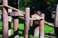 Zwergziege Feldkirch, Arch, Outdoor Structures, Garden, Pigmy Goats, Scenery Photography, Animals, Garten, Arches