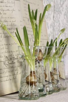 white grape hyacinths in individual bulb vases by eula.snow