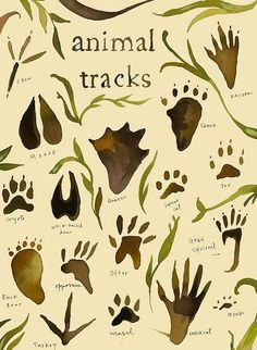 Would be great to make a watercolor poster like this animal tracks photo. Tracks | Flickr - Photo Sharing!