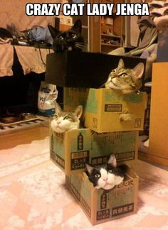 Crazy cat lady jenga.