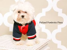 The journey of life is sweeter with a Maltese. Nothing like having a paw when you need a friend. Find your perfect match at Petland Pembroke Pines.