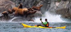 Sea kayaking Kamchatka, Siberia Russia