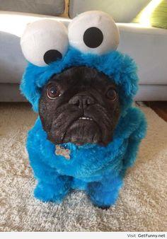 I want a cookie! Om op te vreten