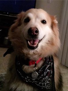 http://ift.tt/2rVYd0T happy 13 year old Husky/Shepherd Charles bff's since he was a pup and he's still going strong :)
