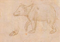 Leonardo Da Vinci, Bear walking , (first half of 1480), metal tip; 10.3 x 13.3 cm. Lent by The Metropolitan Museum of Art, Robert Lehman Collection, 1975 (1975.1.369)