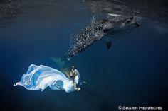 Maravillosa Sesión Fotográfica de Moda Bajo el Agua con Tiburones Ballena | FuriaMag | Arts Magazine