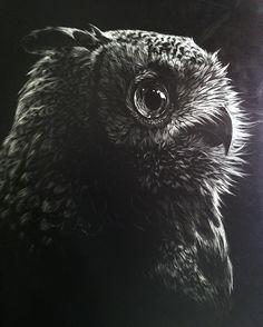 Owl Scratchboard
