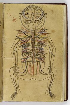 File:Nervous system, Avicenna, Canon of Medicine Wellcome L0013312.jpg