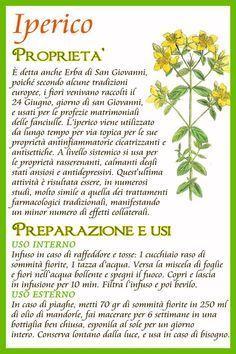 Iperico Magic Herbs, Herbal Magic, Natural Life, Natural Health, In Natura, Keto Nutrition, Wellness Fitness, Green Life, Medicinal Plants