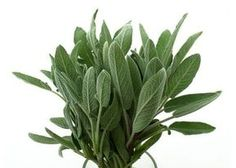 How to Make Sage Essential Oil. Sage is an aromatic plant with many health applications, this is why it is very popular in aromatherapy. Making Essential Oils, Sage Essential Oil, How To Make Oil, Growing Herbs, Medicinal Herbs, Belleza Natural, Natural Cosmetics, Fragrance Oil, Diy Beauty