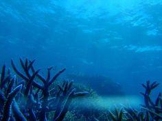 Un leve aumento del mar tendrá un gran impacto en la Gran Barrera de Coral  Ver más en: http://www.20minutos.es/noticia/2354134/0/gran-barrera-coral/calentamiento-global/aumento-mar/#xtor=AD-15&xts=467263