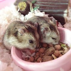 Piggy Land: My Pet Hamsters those hamsters look just like mine!