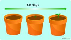 How to Grow a Sunflower in a Pot: 14 Steps (with Pictures)