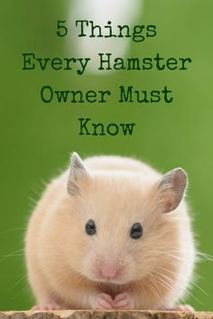 Keep your hamster safe, healthy and happy with these health and wellness tips every hamster owner should know. Keep your hamster safe, healthy and happy with these health and wellness tips every hamster owner should know. Dwarf Hamster Cages, Robo Dwarf Hamsters, Hamster Habitat, Hamster Life, Cute Hamsters, Hamster Stuff, Diy Hamster Toys, Hamster Food, Pets