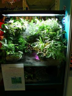 Freshwater Aquaria: Considerations for Scaping and Stocking the Paludarium, Part 2 — Advanced Aquarist | Aquarist Magazine and Blog