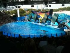 Tilikum refuses to perform during One Ocean killer whale show at SeaWorld, they are HUMANS in a different body and should be treated as such END CAPTIVITY DON'T BUY A TICKET!