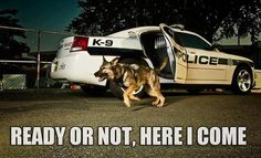 28 best Police Dog Humor images on Pinterest | Military ...