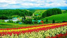 Flower fields - Bing Images