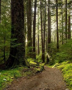 Where is your path taking you? #neverstopexploring #optoutside #lifeofadventure #beautifuldestinations #forest #rainforest #liveauthentic #travelawesome