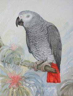 African Grey Parrot by Ria Winters