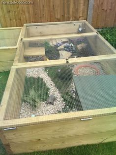 I have seen numerous suggestions for Russian tortoise diet Some great Some awful. Russian Tortoises are nibblers and appreciate broad leaf plants. Tortoise Cage, Tortoise House, Tortoise Habitat, Tortoise Turtle, Turtle Enclosure, Reptile Enclosure, Turtle Pond, Pet Turtle, Box Turtle Habitat