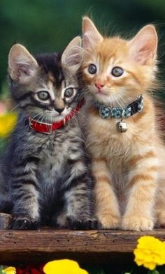 So Adorable Kittenns!