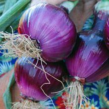 Purple onion long beach ca