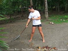 Volunteer Costa Rica Sea Turtles Conservation Program These programs are scattered along the Pacific Coast with the main projects in Puntarenas and Guanacaste provinces. The projects range from very secluded locations that require 4/4 vehicles and boats to access the program area to those closer to towns.  Volunteers participate on the sea turtle preservation including monitoring and registering nesting patterns, record keeping of eggs, moving eggs to the hatchery, beach patrols, freeing of…