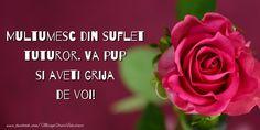 Felicitari de multumire - Multumesc din suflet tuturor Clara Alonso, Thankful, Rose, Plants, Design, Pretty Quotes, Morning Quotes, Pink