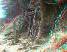 Álbum de ejemplos de fotos 3D.