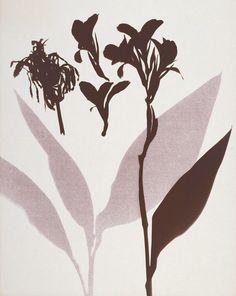 Lourdes Castro : Grande Herbário de Sombras. Fototipia, 1972