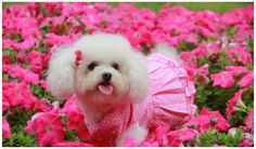 Crazy Small Fat Puppies – Funny and Cute Dog Pictures - HoliCoffee Fat Puppies, Cute Puppies And Kittens, White Puppies, Cute Baby Dogs, White Dogs, Dog Baby, Cute Puppy Photos, Cute Dog Pictures, Animals Beautiful