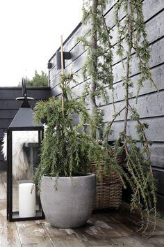 Plants_outdoors stylizimo_700