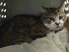 Precious Pinky is sad he was dumped at ACC shelter in Brooklyn New York. For no reason. Please do not let him die alone tomorrow at noon. .praying for a rescue.if you can help save this boy please visit pets on death row on Facebook URGENT