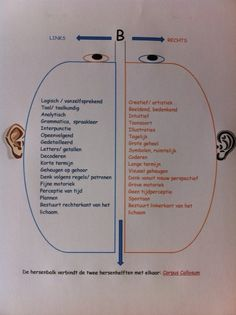 Waar zit wat in je 2 hersenhelften