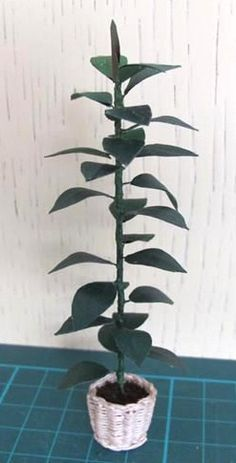 how to: ficus plant