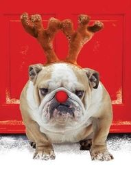 """""""STOP with the reindeer games, already, will ya?"""""""
