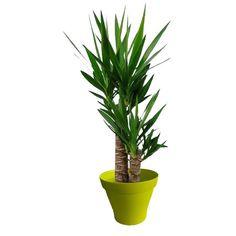 Plantes d 39 int rieur avec pots vert on pinterest ficus for Cache pot interieur