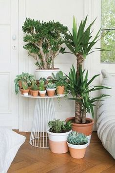 Yucca plant indoor, plants indoor, indoor gardening, potted plants, o Cacti And Succulents, Potted Plants, Garden Plants, Indoor Plants, Plant Pots, Succulent Pots, Cactus Planters, Yucca Plant, Indoor Cactus