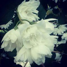 Yasmine Flower