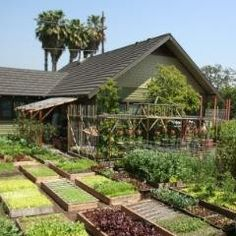 Homesteading - www.facebook.com/Homegrownandhappiness
